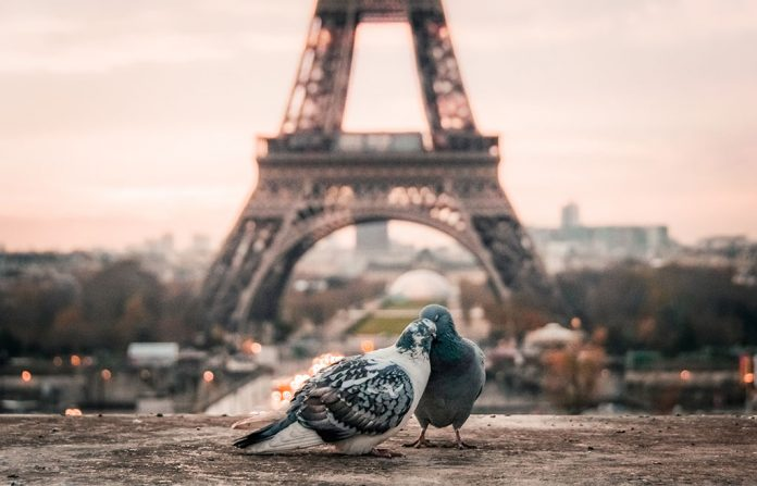 birds and Paris Eiffel Tower