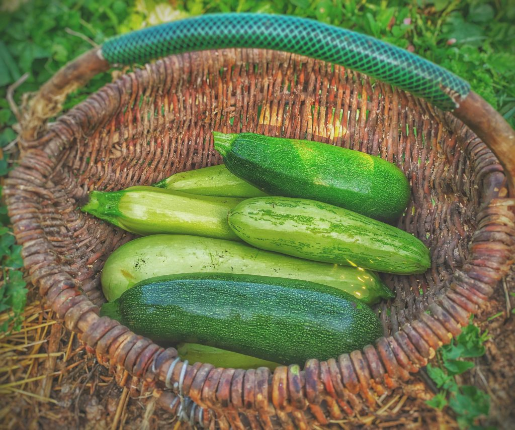 Cucumber | Vegetables For Health